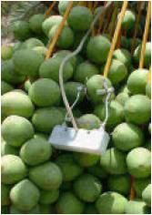 FI-SM Small Fruit Growth Sensor